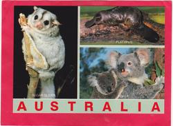 Modern Post Card Of Fauna Sugar Glider,Platypus,and Koala, Australia ,B25. - Australia