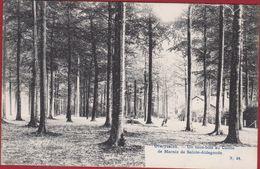 Overijse Overijssche Un Sous-bois Au Comte De Marnix Sint Van Sainte Ste Aldegonde 1907 (zeer Goede Staat) - Overijse