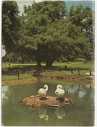 La Vallée De HOULA Est Le Paradis Des Oiseaux - Bird Paradise Hula Valley - (Israel) - Israël