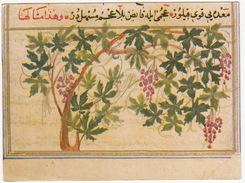 Jerusalem - 17th Century Manuscript - Zakaria Al-Kazwini - University Library - (Israel) - Israël
