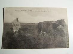 T36  MAROC  Scene  Et Types Laboureur Marocain - Autres