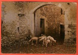 EAI-26  Miroir De La Provence, Troupeau De Chèvres. Circulé Avec Timbre Suisse. Très Grand Format - Provence-Alpes-Côte D'Azur