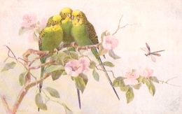 "Raphael TUCK""OILETTE"" Birds  & Blossoms - Tuck, Raphael"