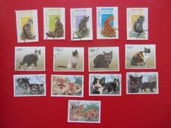 Afghan Chat, Afghanistan Congo Tchad Cat Gato Katze Gatto Pisica Katt - Gatti