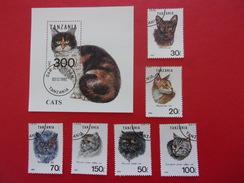 Tanzanie Chat Européen Cat Gato Katze Gatto Pisica Katt - Katten
