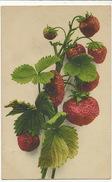Fruit  Fraise Strawberry Rommel Stuttgart 715   1907 - Other