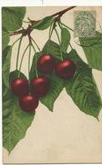 Fruit  Cerise Cherry Rommel Stuttgart 702   1906 - Fleurs, Plantes & Arbres
