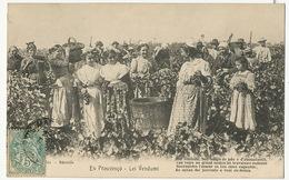 Vendanges En Provence En Prouvenço . Lei Vendumi  Patois Provençal - Weinberge