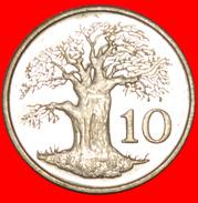 § GREAT BRITAIN: ZIMBABWE ★ 10 CENTS 1991 MINT LUSTER! LOW START★ NO RESERVE! - Zimbabwe