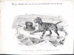 """Image Litho/""""les Animaux Savants""""/Le Chien Barbet/d'aprés Dugourg/Turgis  Edit./Nepveu Lib./Paris/Vers 1840 IMA223 - Vieux Papiers"""