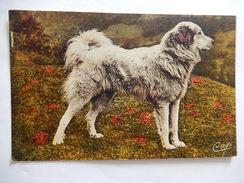 CPA  - (65) - SCENES ET TYPES DES PYRENEES - CHIEN DE MONTAGNE - DOG - BR3349 - Unclassified