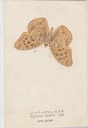 Argynnis Laodice Pall. - Jap.AK       (A-47-160212) - Insectes
