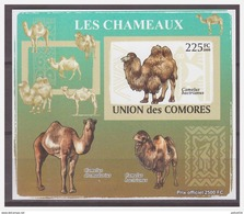 0198 Comores 2009 Kameel Camel S/S MNH Imperf - Timbres