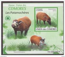 0107 Comores 2009 Wild Zwijn Pig Boar S/S MNH Imperf - Autres