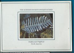 Fossils   Pocket Guide   Fossile - Libros, Revistas, Cómics