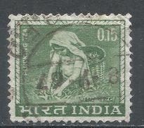 India 1965. Scott #412 (U) Tea Picking, Cueillette De Thé - Inde