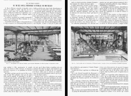 LES NOUVELLES GALERIES Du MUSEE ROYAL D'HISTOIRE NATURELLE  De  BRUXELLES   1905 - Belgique