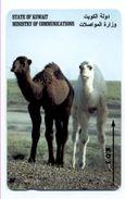 Chameau  CAMEL Animal Télécarte Telefonkarten Phonecard (S.246) - Koweït