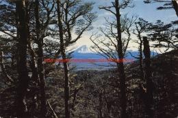 Mount Ngauruhoe - Turangi - New Zealand - Nouvelle-Zélande