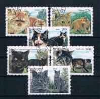 Kongo 1999 Katzen Satz Gest. - Congo - Brazzaville