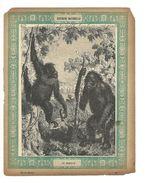 Gorille Singe Protège-cahier Couverture De Cahier Corbeil Crété Fin XIX  Didactique Au Dos. Etat Moyen Mais RR. - Animals