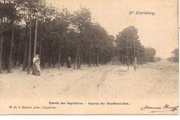 ST. MARIABURG Ingang Der Mastbosschen Hoelen  Nr  64  Ref 6/212 Doorloper Stempel 1906 - Brasschaat