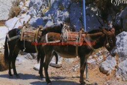 Donkeys - Cyprus - Chypre