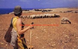 Sheep - Cyprus - Chypre