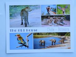 Carte Postale: BOTSWANA : The Old House CHOBE, Animaux - Botswana