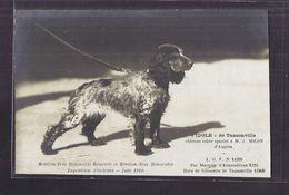 "CPA 45 - ORLEANS Exposition Canine Juin 1910 "" IDOLE "" De Tansonville Chienne Coker Spaniel D' ANGERS TB PLAN CHIEN - Orleans"