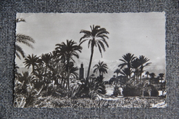 MARRAKECH - La Palmeraie Et La Koutoubia - Marrakech