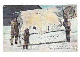 CANADA  ( Esquimeau - Eskimo ) Stretching Polar Bear's Skin - Canada