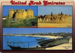 Fujaira - Camels - Jumaira Beach - Dubai - Dubai