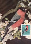 D30522 CARTE MAXIMUM CARD 1965 BULGARIA - PYRRHULA BULLFINCH BOUVRIEUL CP ORIGINAL - Sperlingsvögel & Singvögel