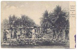 Cpa Southern Nigéria Plantation De Cocotiers à Toepo - Nigeria