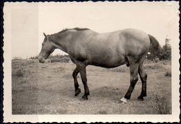 Pferd Aus Wiese Bei Taning 1935 Echtfoto - Orte