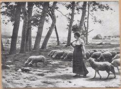 CHROMOS  PAPETERIE ALGERIENNE  à Alger - Troupeau De Moutons - ENCH2906/358 - - Other
