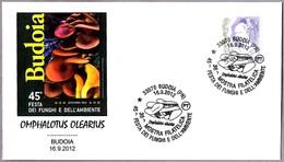 45 FESTA DEI FUNGHI - OMPHALOTUS OLEARIUS. Setas - Mushrooms. Budoia, Pordenone, 2012 - Champignons
