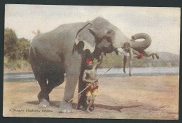 A Temple Elephant , Ceylon    - Odf50 - Sri Lanka (Ceylon)