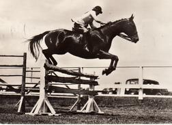 Jumping - Paarden