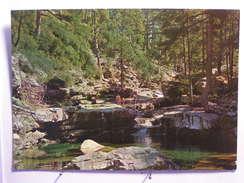 Aitone - La Forêt Et La Piscine - Autres Communes
