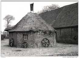 STALHILLE Bij Jabbeke (W.Vl.) - Molen/moulin - Prentkaart Van De Rosmolen Aan De Cathilleweg. Historische Opname (1980) - Jabbeke