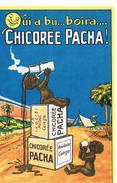 J  Chicoree Pacha - Publicité