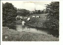 Weillen Le Flavion ( Vaches ) - Onhaye