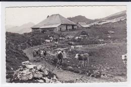 Les Sciernes D´Albeuve, Chalet De Lys Avec Troupeau De Vaches No 11319 - FR Fribourg
