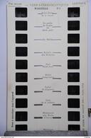 LESTRADE :  MARSEILLE   N°1 - Visionneuses Stéréoscopiques