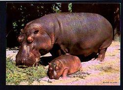 Animaux / Hippopotame Et Son Petiit / Verso Publicité Pharmaceutique Laboratoire Logeais (timbre Préoblitéré) - Hippopotames
