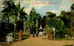 AUSTRALIA - SYDNEY - THE FOREST, BOTANICAL GARDENS 1912 - Sydney