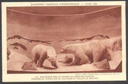 Exposition Coloniale Internationale Paris 1931 - Pavillon Danemark - Ours Blancs.... - Voir 2 Scans - Tentoonstellingen