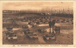 CPSM 33 - Arcachon - Parc à Huitres - Les Collecteurs - La Récolte - Arcachon